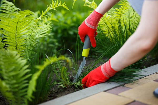 person using a trowel to dig out weeds from a garden bed