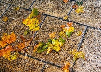 fallen leaves on garden pavers