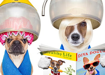 Keep your dog looking fabulous and healthy