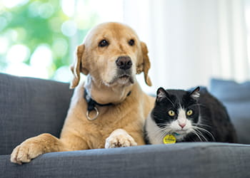 Cat and dog sitting on a sofa