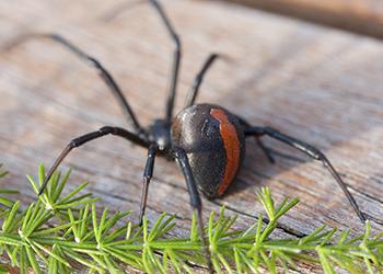 So, where do spiders lurk?