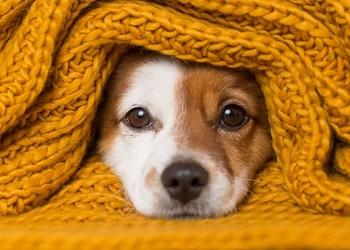 Dog Kennels - Kingsley