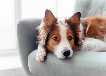 pet dog lying on an armchair