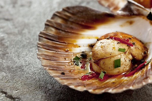 Scallop In Shell