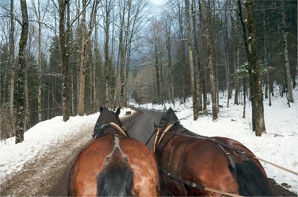 Horse and Cart to Neuschwanstein