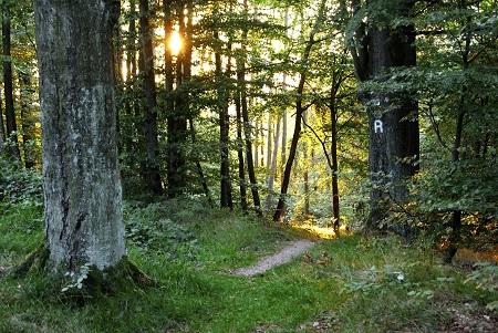 Rennsteig Hiking Trail