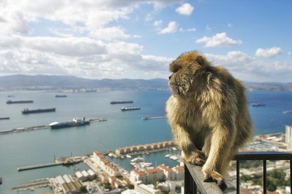 Macaque Gibraltar