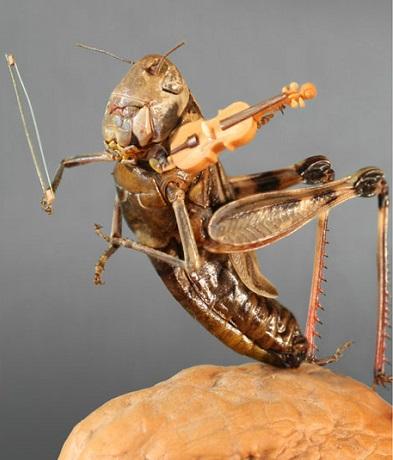 Grasshoper Miniature
