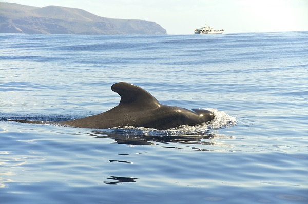 Whale Canary Islands