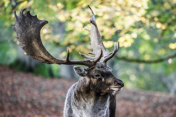 Aarhus Deer Park