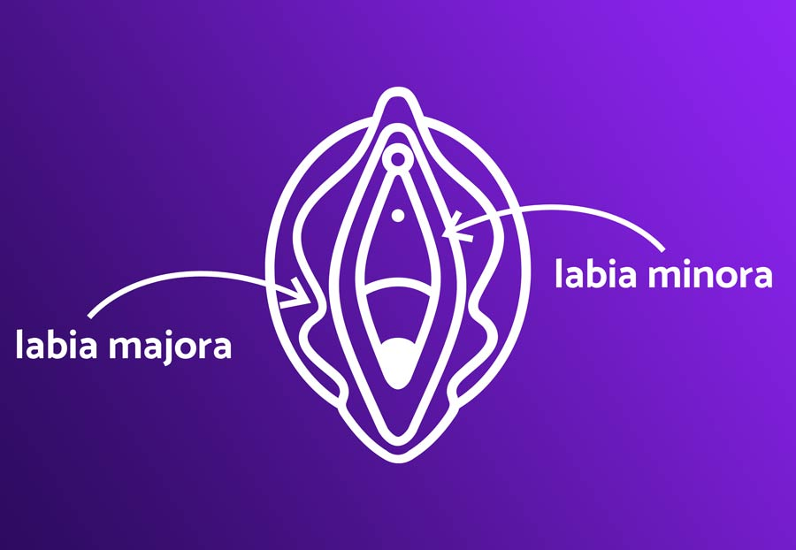 Outie Vagina Diagram