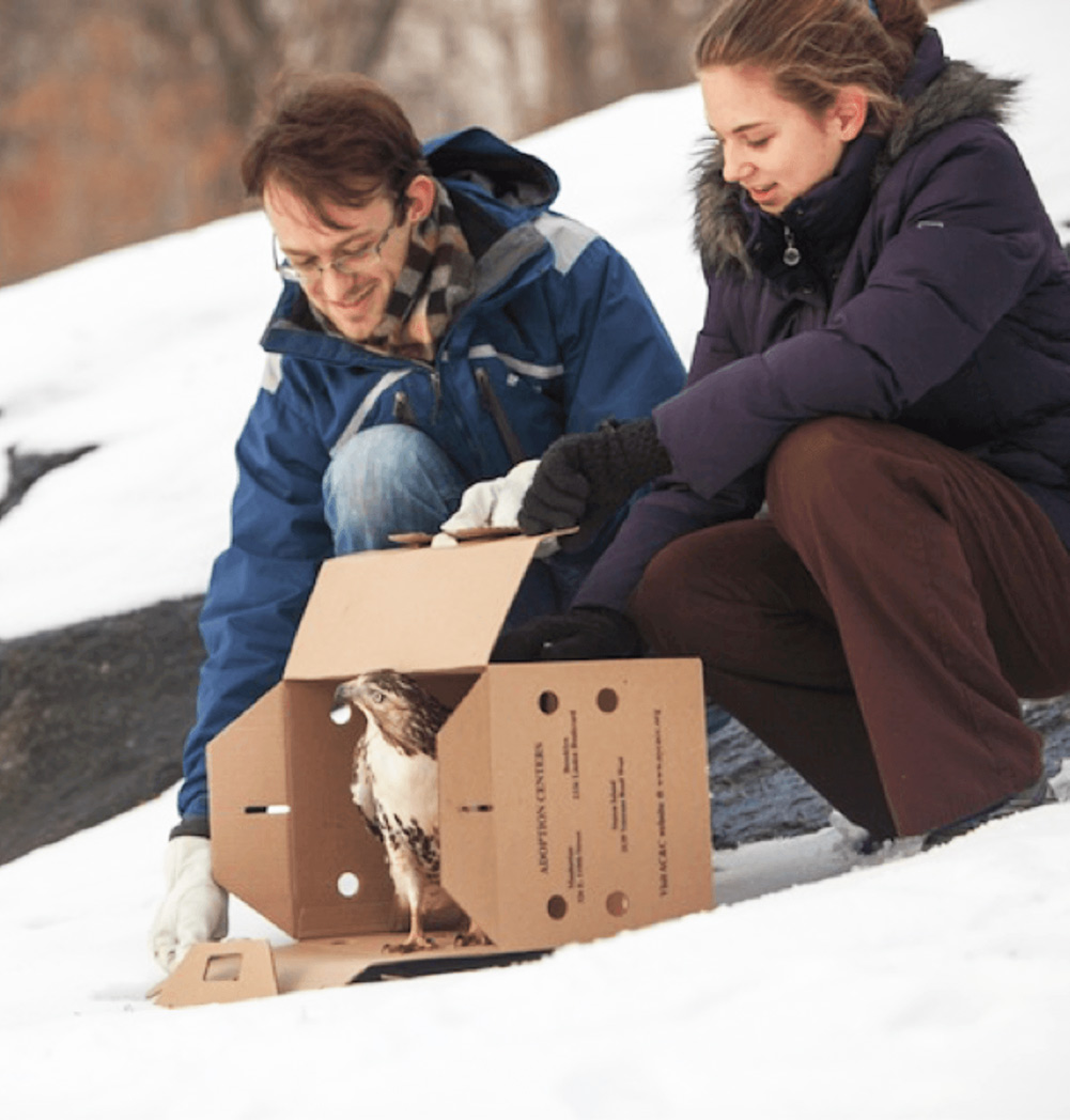 An image of two people releasing a bird from a carrier into a snowy landscape