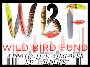 Wild Bird Fund's logo