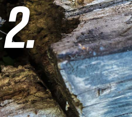 Hint 2 - image of rotten wood