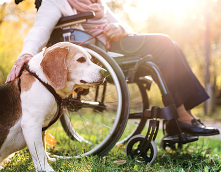 dog and owner in wheelchair