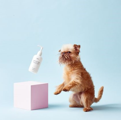 small dog stands slightly on its hind legs while to the left a bottle of lotion is bounced over a square box prop