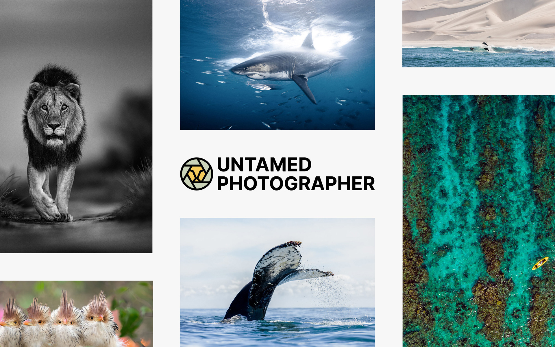Creatd, Inc. Announces Strategic Investment in Untamed Photographer, NFT Collaboration, and Vocal Community and Challenge Sponsorships
