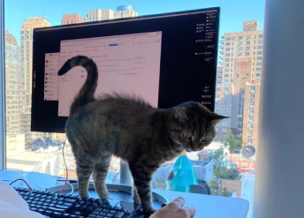 cat on desk when working from home