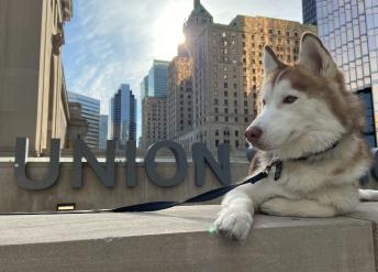 dog in union square