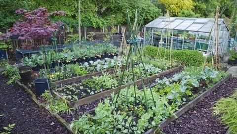 Belt Conveyor Guarding Employee Garden