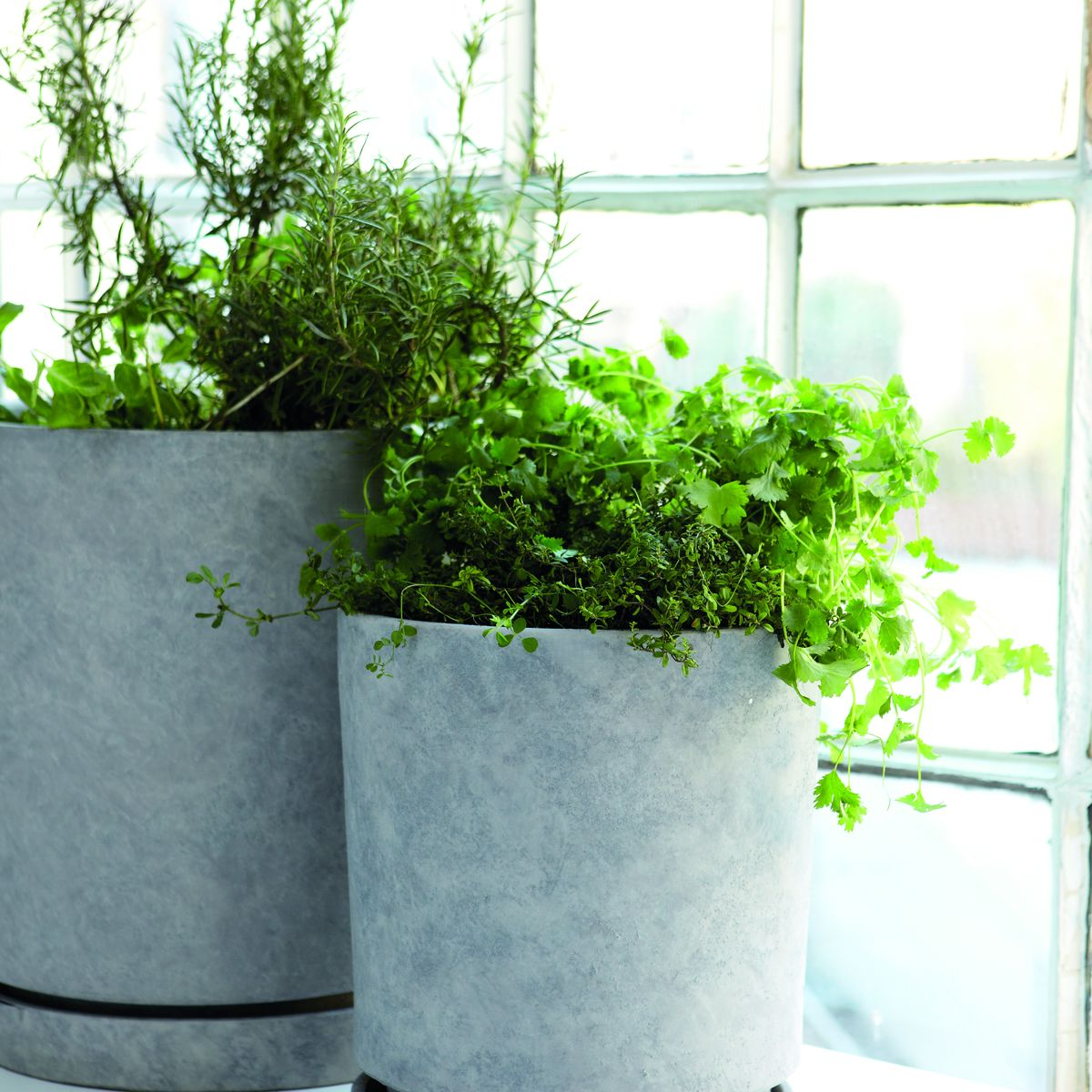 grey concrete planter