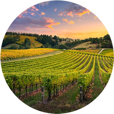 Vineyard Stewardship Photo