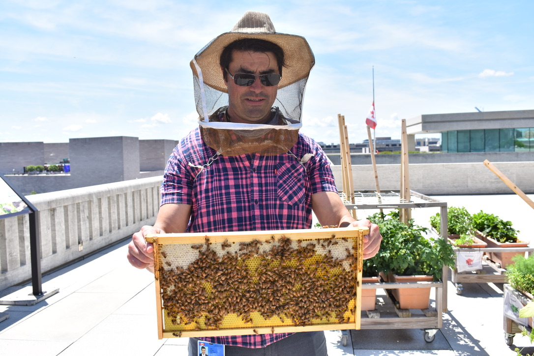 Colin Shonk examines the bees in residence at the Embassy of Canada. Photo credit: Molly McCluskey