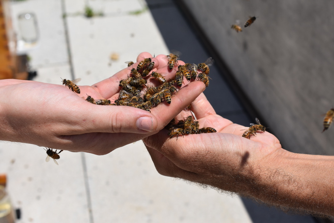 An exchange of bees at the Canadian embassy. Photo credit: Molly McCluskey