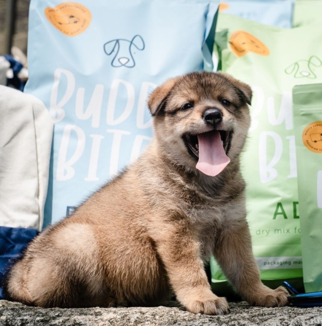 An adorable puppy Husky with its tongue out. Large bags of Buddy Bites dog food are behind it. The dog is very cute.