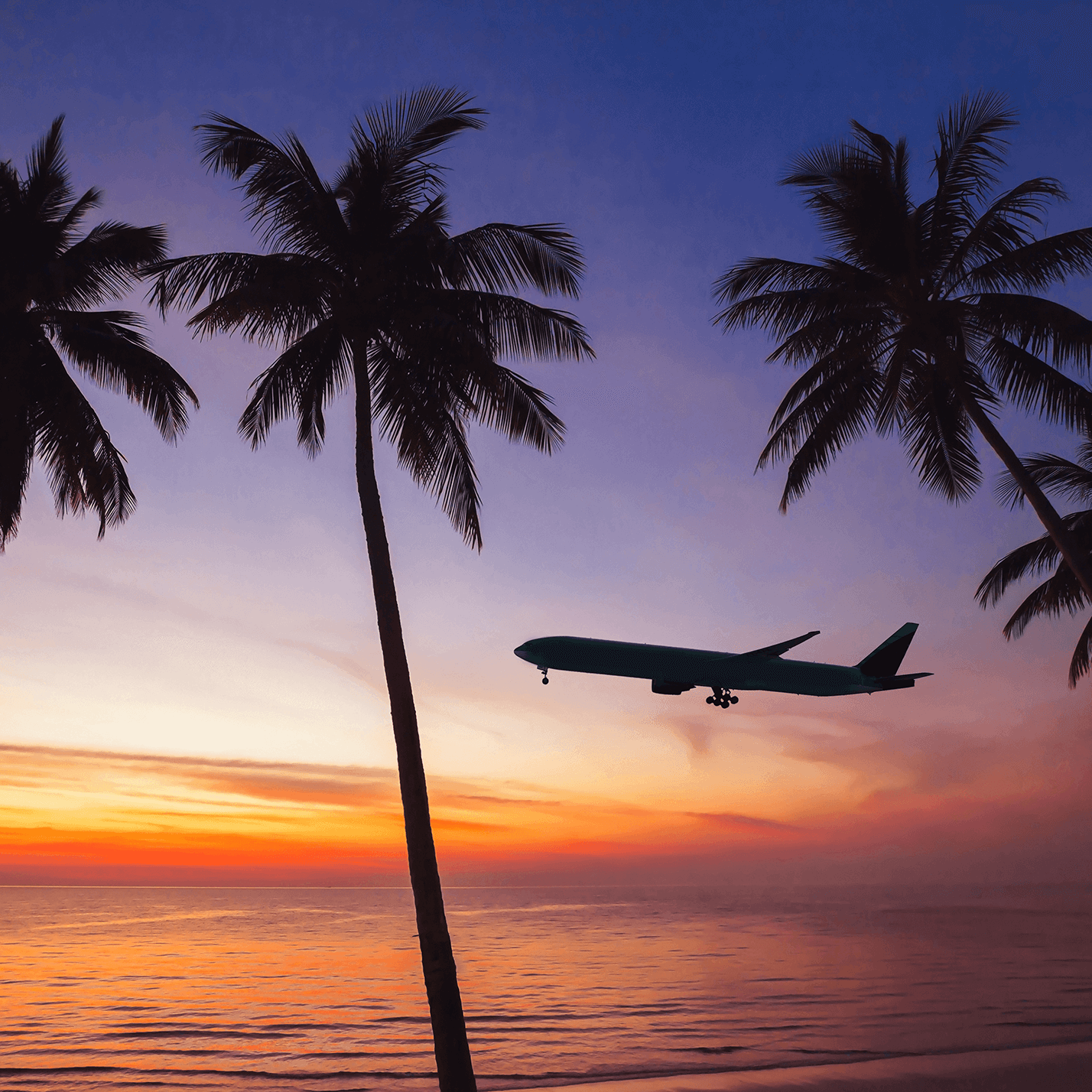 A silhouette of a plane seen flying between two palm trees, against a sunset.