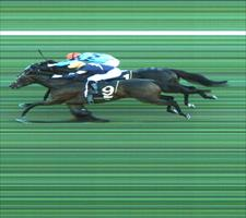 The close finish of the Group 1 All Aged Stakes with Tofane outside winning over Pierate inside, photo finish picture ATC
