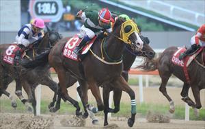 Blue Chipper, picture Hong Kong Jockey Club
