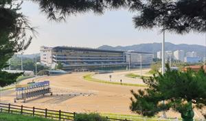 Seoul Racecourse, picture Korea Racing Authority