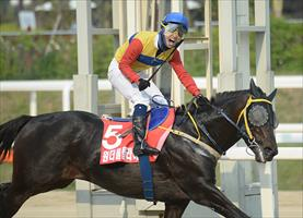 Wonderful Fly, picture Korea Racing Authority