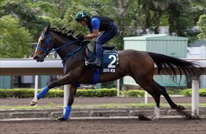 Deirdre (JPN) at Sha Tin in April, picture Hong Kong Jockey Club