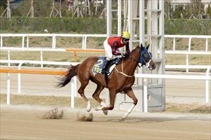 Cheongdam Dokki winning at Seoul, picture Korean Racing Authority