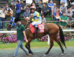 Silver Wolf (AUS), picture Korea Racing Authority