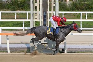 Lead Money and Antonio Da Silva, picture Korea Racing Authority