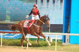 Cheongdam Dokki and jockey Lim Gi Won cross the line in the Busan Mayor's Cup, picture Korea Racing Authority