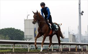 Neorealism at trackwork at Sha Tin on Tuesday morning, picture Hong Kong Jockey Club