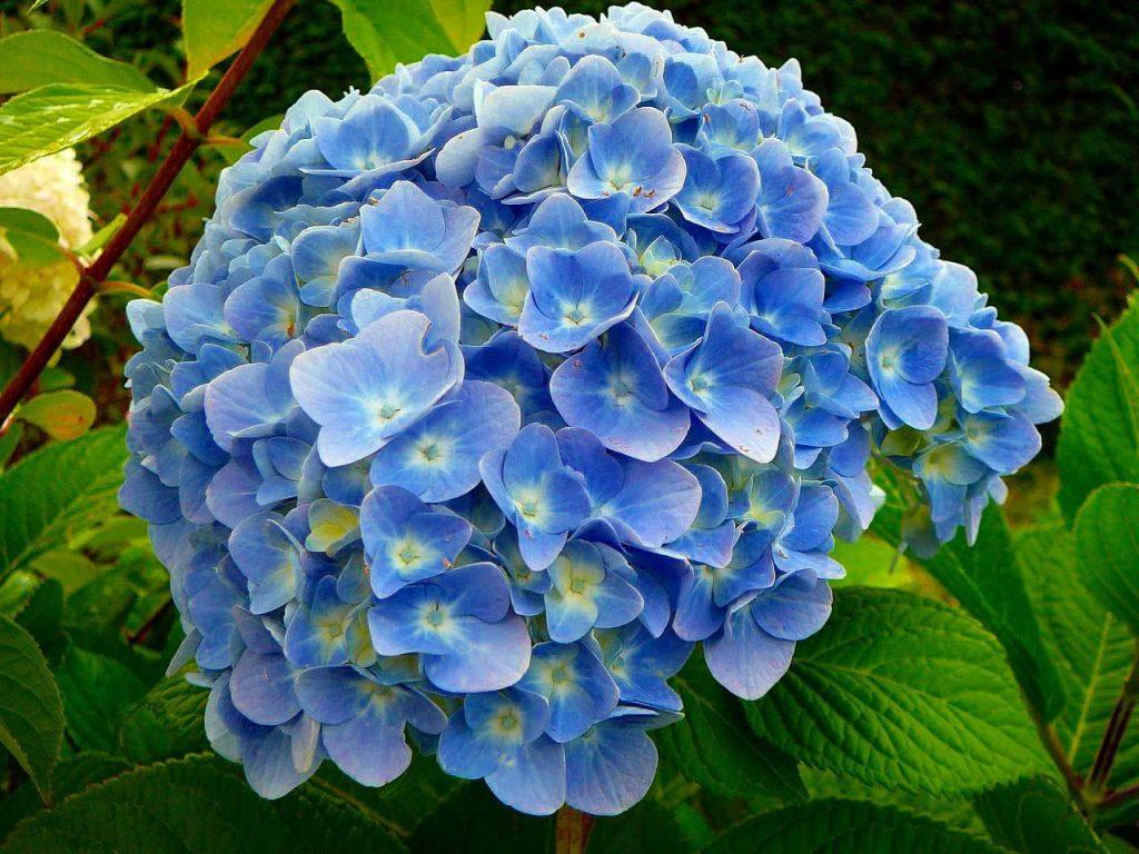 blue-flower-ideas