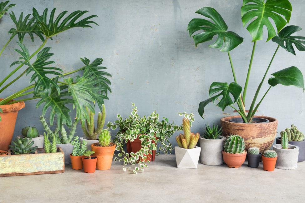 garden-landscaping-ideas