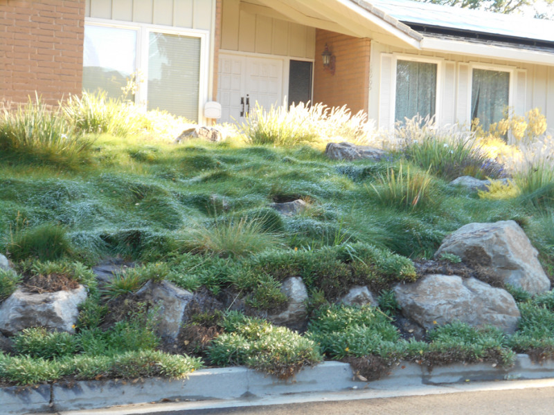 landscaping-ideas2