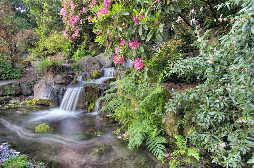 Waterfall-Or-Flower