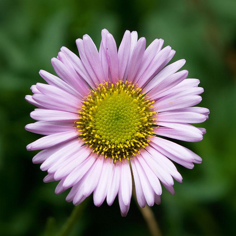 cool-flower-ideas
