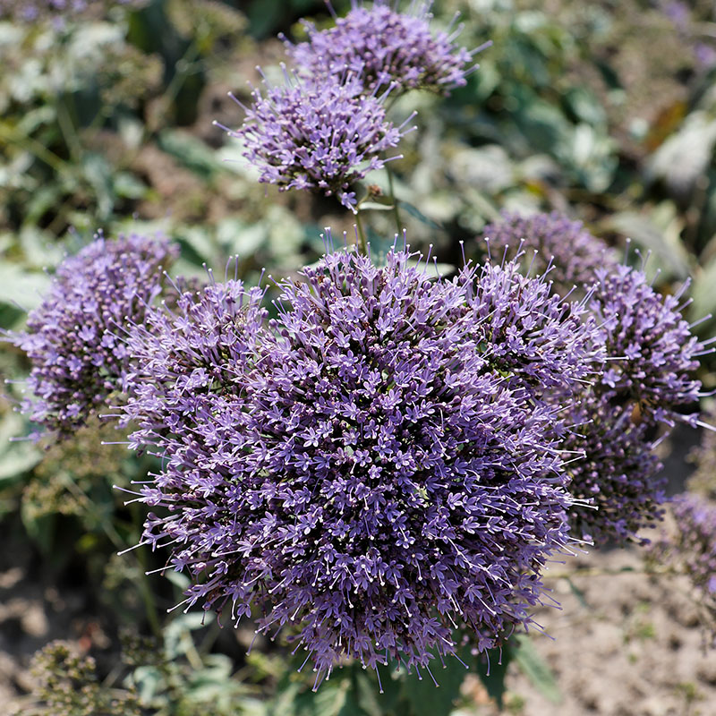 rare-flowers