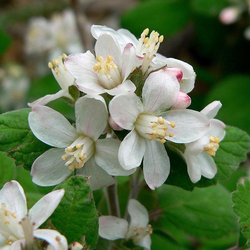 popular-flowers