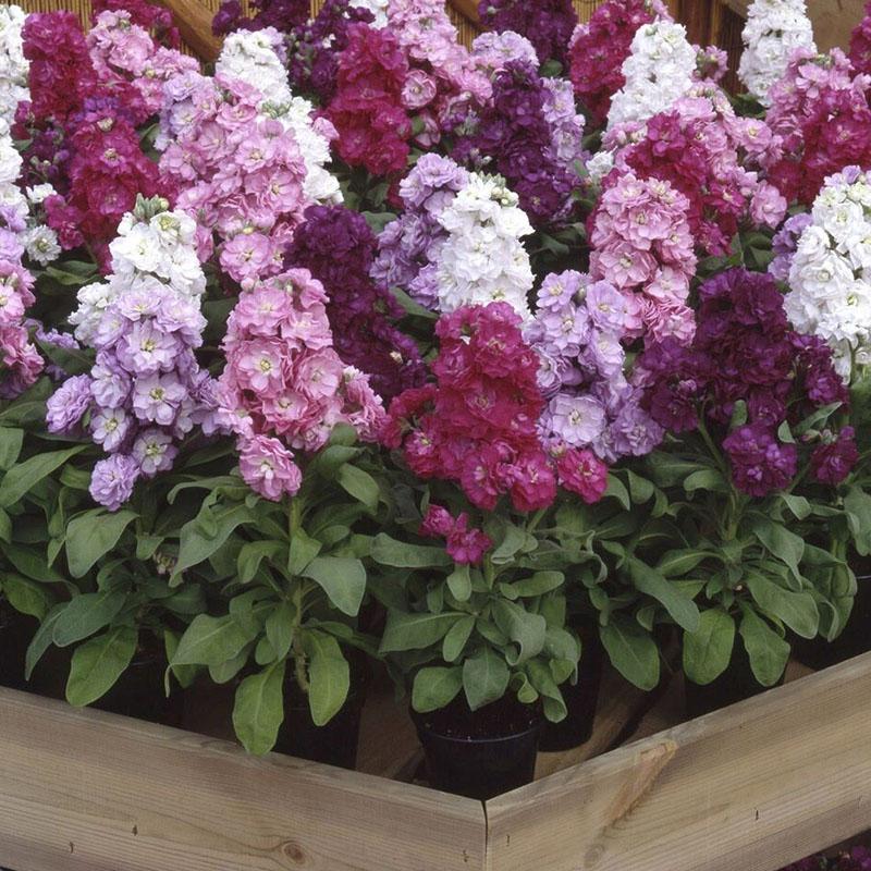 types-of-flowers-for-garden