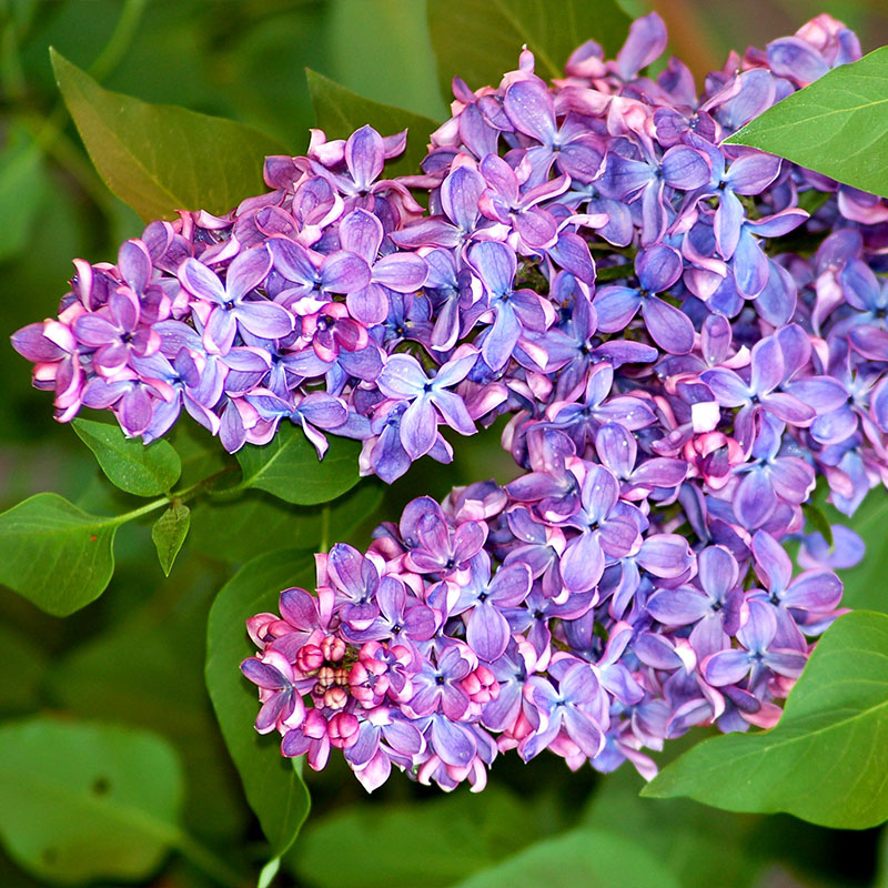 cool-flowers-for-garden