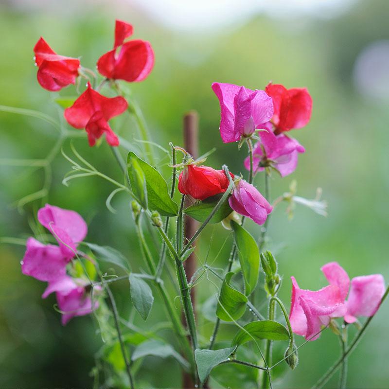 flower-garden-ideas2